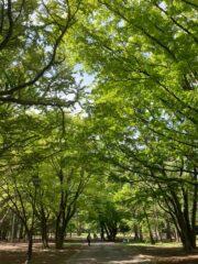 木の名前を英語で言うと?「英語で森林さんぽ」の楽しみ方