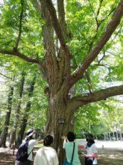 英語で森林さんぽ。札幌開催